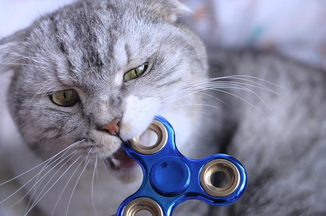 Fidget Spinner, Cat, Biting
