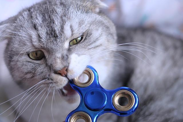 Fidget Spinner, Cat, Biting