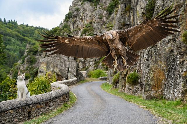 Condor, Cat, Mounting, Flight, Road, Rocks, Animals