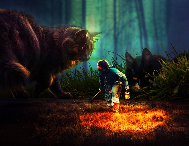 People, Mammal, Cat, Fantasy, Forest, Warrior, Man
