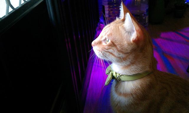 Cat, Gel Reviews, Pet