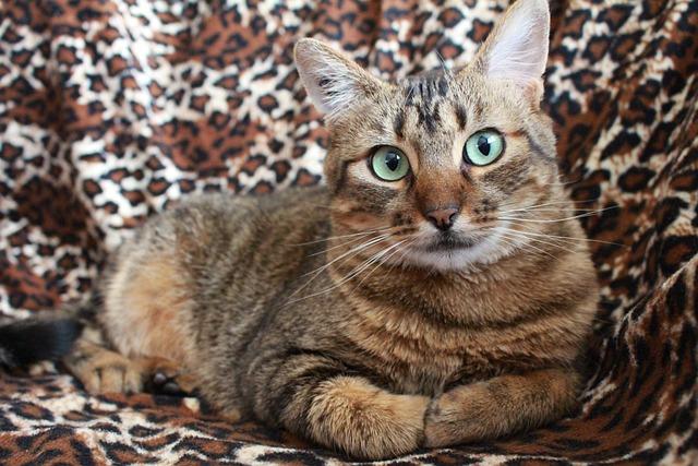 Cat, Grey Cat, Pet, Cat Green Eyes, Tabby Cat