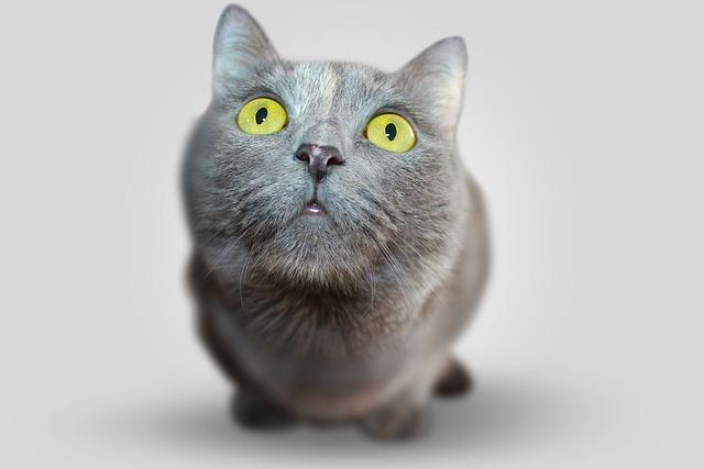 Cat, Animal, Eyes, Grey, View, Views, Pet, Darling