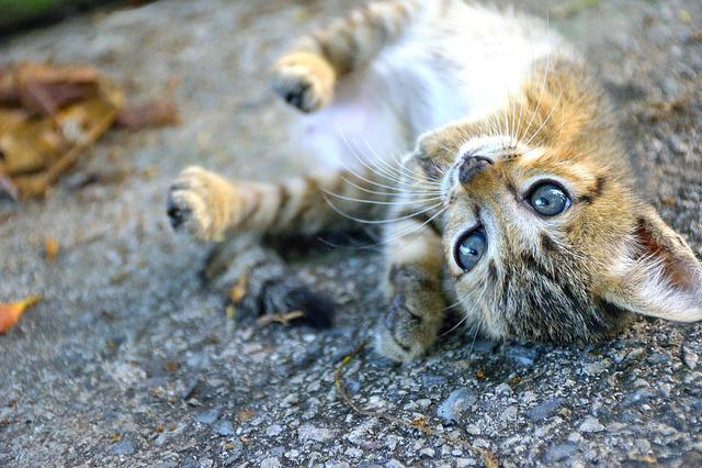 Animal, Animals, Cat, Cats, Evening, Eye, Eyes, Kid