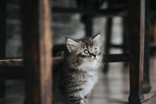 Cat, Pet, Kitten, Cute