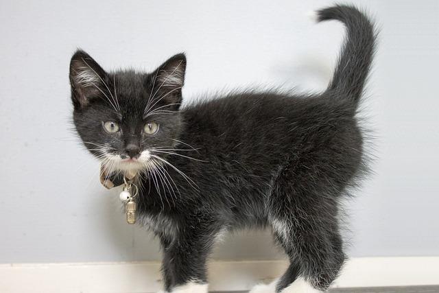 Kitten, Sweet, Cat, Fun, Beast, Good Looking, Animal
