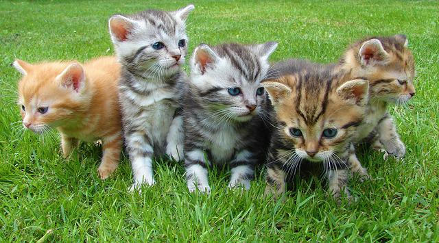 Kittens, Cat, Cat Puppy, Rush, Free Float, Kitten