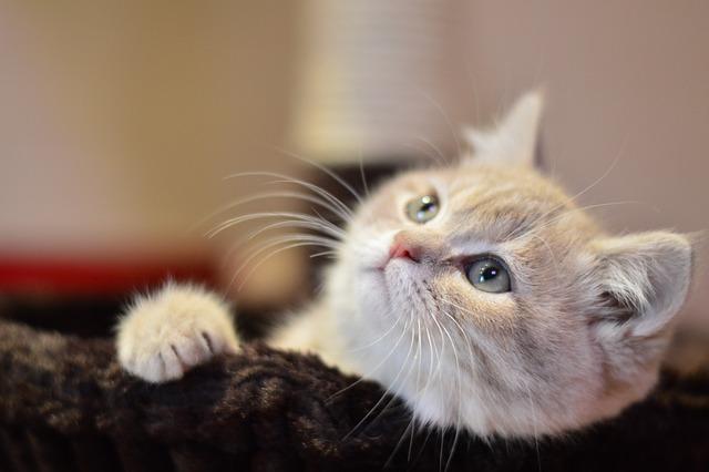 Cat, Cute, Kitty, Pets