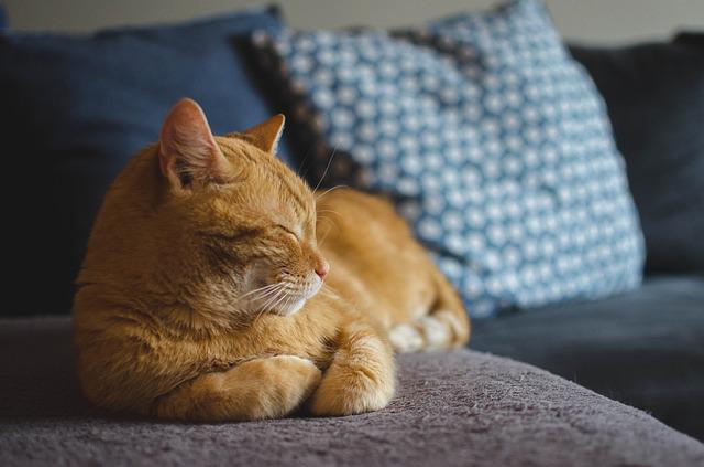Cat, Red Cat, Cat's Eyes, Lying Cat, Dream