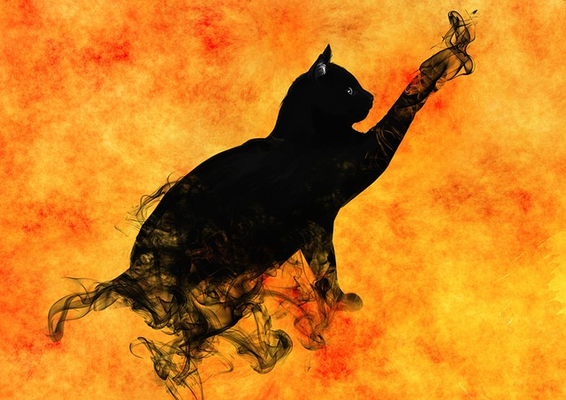 Cat, Surreal, Silhouette, Mystical, Magic, Mysterious