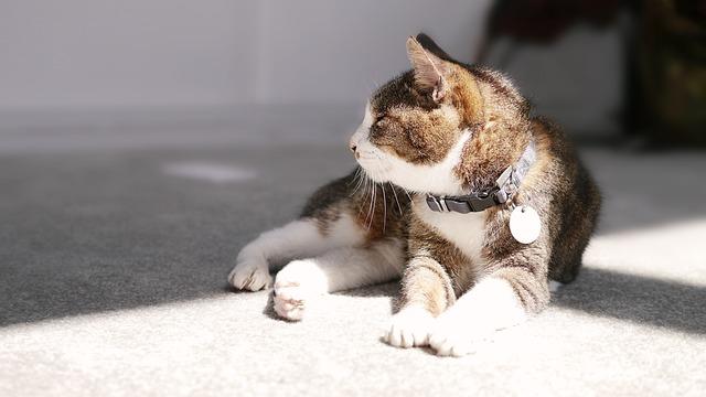Cat Mia, Rest, Pet
