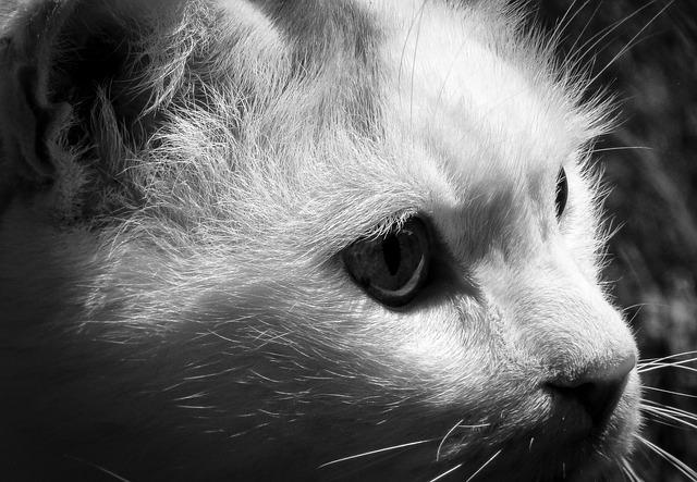 Cat, Focus, Animals, Nature, Natural