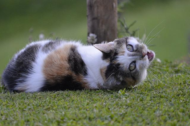 Cat, Hildegard, Domestic Cat, Animals, Nature