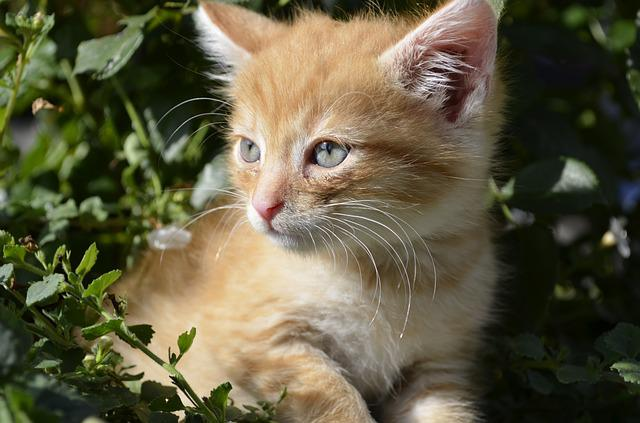 Kitten, Cat, Animals, Summer, Nature