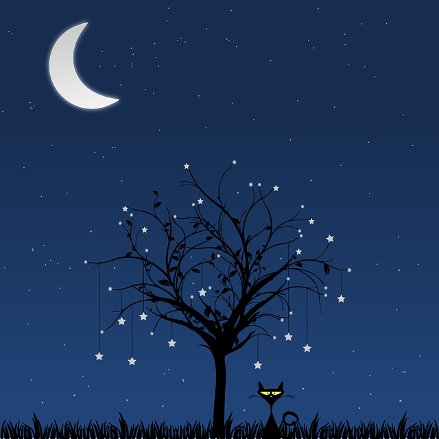 Moon, Tree, Cat, Night, Star