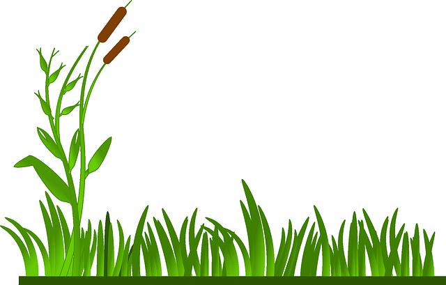 Grass, Lawn, Green, Cat O' Nine Tails, Plants, Greenery