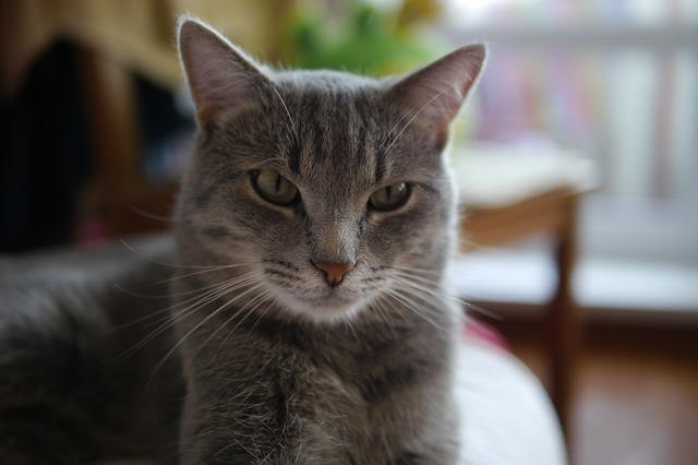 Cat, Cute, Animals, Pet, Home, Portrait, Kitten, Young