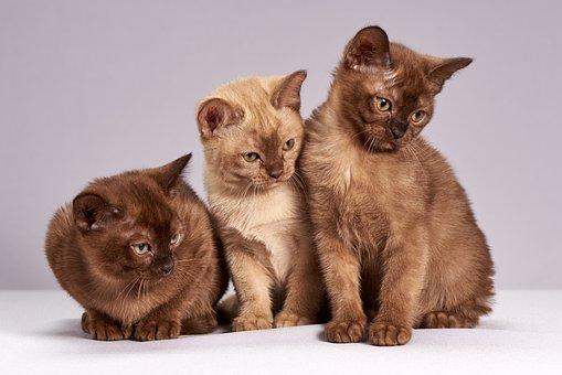 Cute, Animals, Mammals, Pet, Cat, Kittens