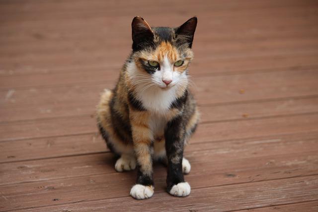 Cat, Pet, Gilnyangyi, Pets, Animal, Cute Animals