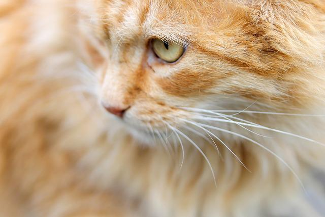 Cat, Red Cat, Cat's Eye, Animal, Nature