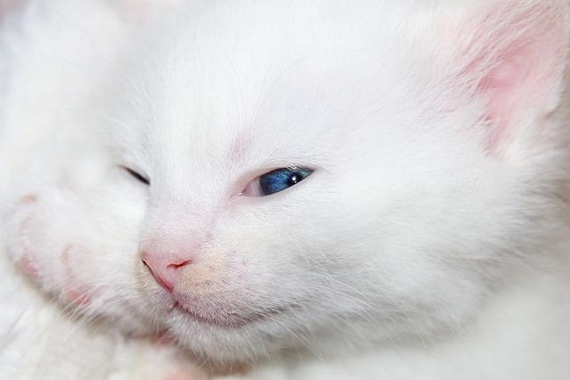 Cat, Kitten, Cat Baby, Pet, Cute, Red, Animal, Adidas