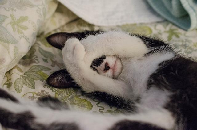 Cat, Animal, Pet, Bed, Sheet, Room, Blanket