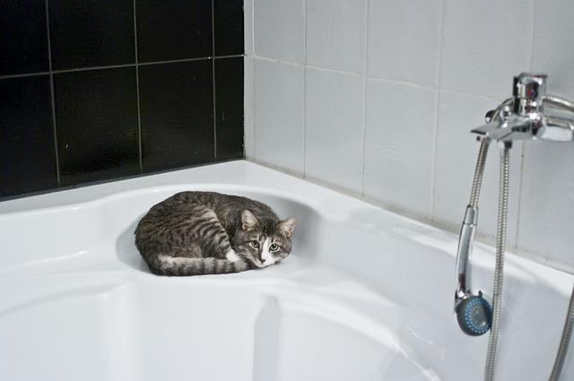 Cat, Bathroom, Shower Head