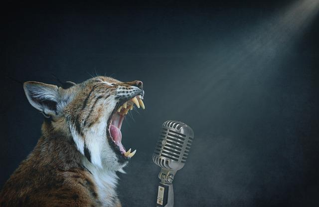 Rock Star, Singer, Singing, Entertainment, Lux, Cat