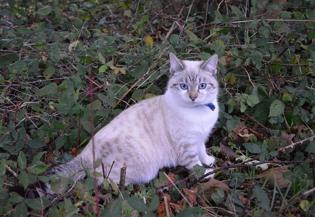 Cat, Kitten, Pussy, Cat Sitting, Cat Eyes, Blue Eyes