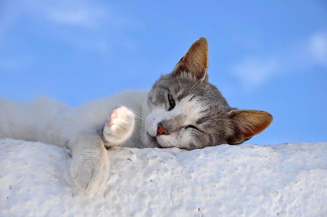 Cat, Sleep, Animal