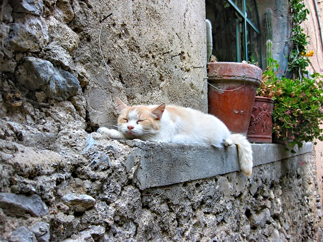 Cat, Sleeping Cat, Cat Sleeps, Positano, Italy