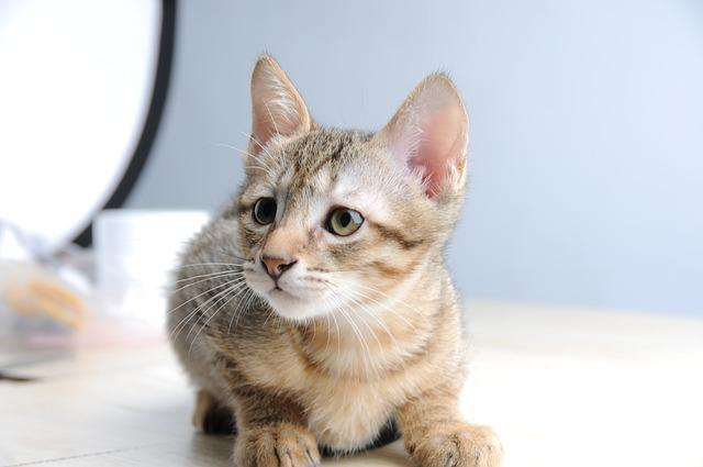 Pet, Cat, Small Cat, Melancholy