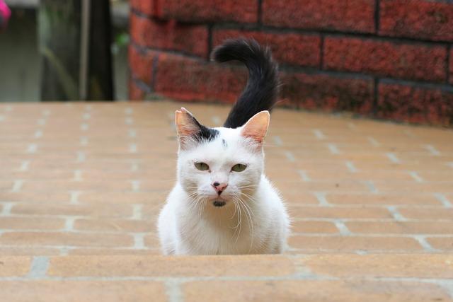 Cat, Animal, Standing
