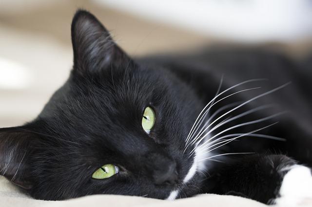 Cat, Bed, Cozy, Cute, Pet, Cat Staring, Cat Looking