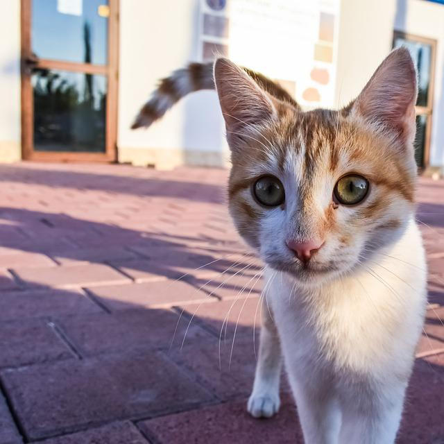 Cat, Stray, Young, Feline, Animal, Eyes, Cute, Looking