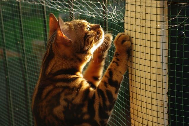 Cat, Bengal, Sunny