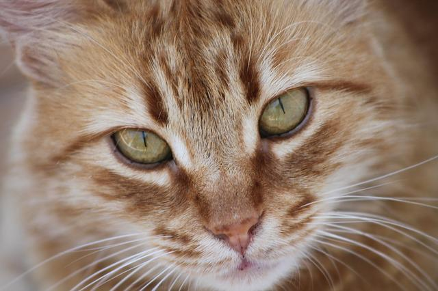 Cat, Overview, Tabby, Animal Portrait, Cute