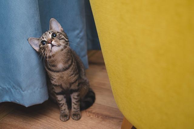 Cat, Bury Cat, Animal, Sitting Cat, Tabby, Charming
