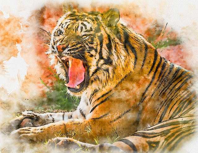 Tiger, Cat, Feline, Mammal, Exotic, Predator, Nature