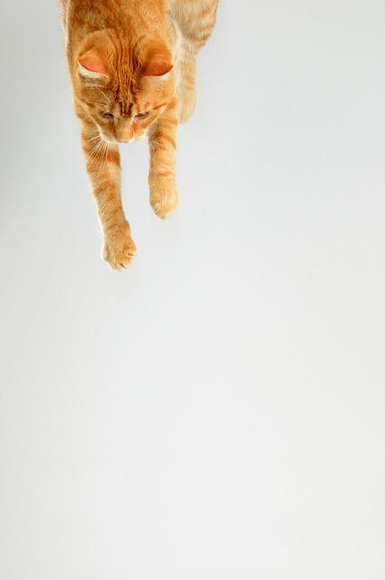 Cat, Tomcat, Pet, Redheaded, Leaping Cat, Jump