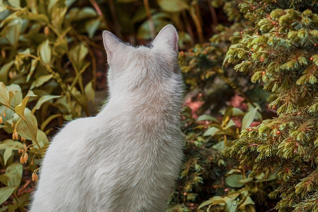 Cat, View From The Rear, Animal, Pet, Mammal