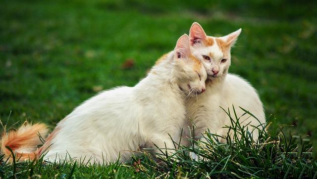 Green, Grass, Playground, Nature, White, Cat, Kitten