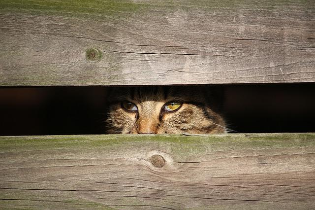 Cat, Kitten, Young Cat, Mackerel, Hiding Place, Wood
