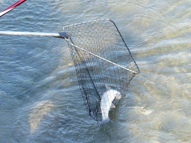 Web, Fish, Catch, Caught, Water, Fisherman, Landing Net