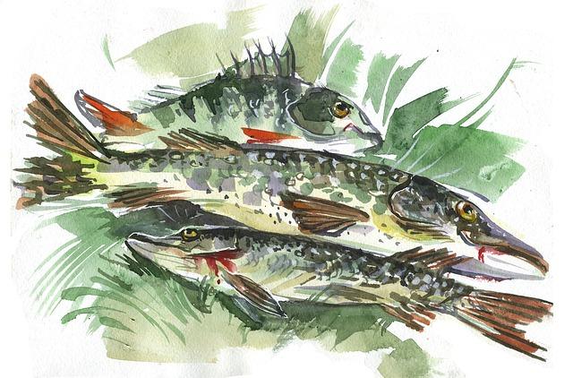 Fish, Nature, Animals, Catch, Background, Fishing