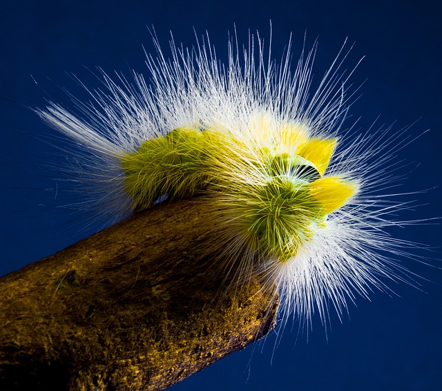 Caterpillar, Hairy, Prickly, Close, Book Track Walk