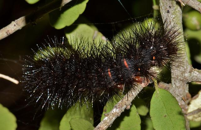 Caterpillar, Furry Caterpillar, Fuzzy Caterpillar