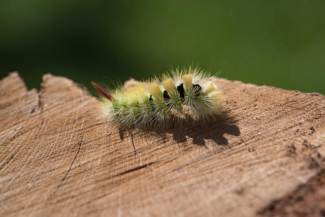 Caterpillar, Green, Green Caterpillar, Nature, Animal