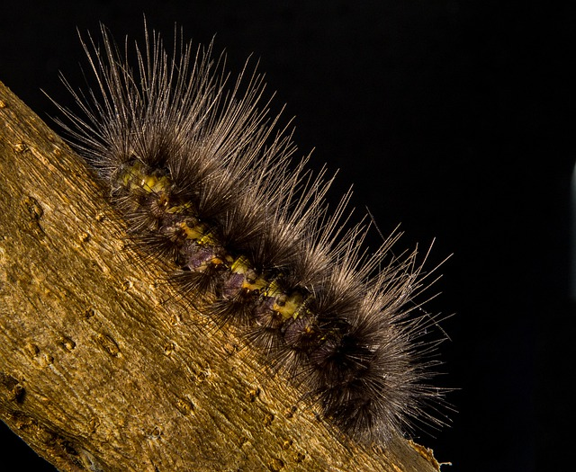 Caterpillar, Prickly, Hairy, Close Up