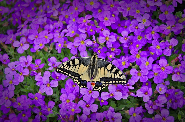 Butterfly, Caterpillar, Insect, Nature, Flower